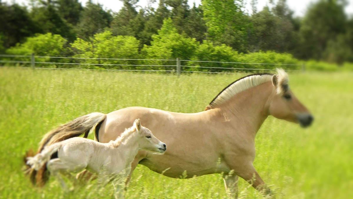 konskie-ranczo3